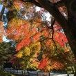 京都散策、秋を楽しむ