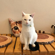 保護猫カフェ森のねこ…