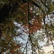 秋好きだぁなぁ