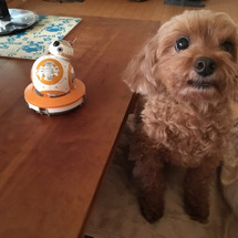BB-8とチューバッ…
