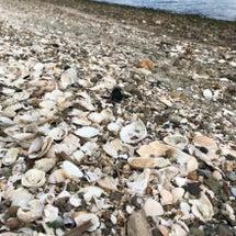 貝殻のサンタクロース