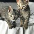 トラ猫の魅力♡