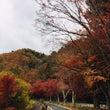 秋なので紅葉を