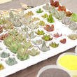 多肉植物の虹色サンド…