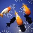 日本の金魚♪
