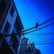 烏と建物と電線