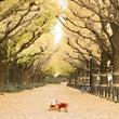 外苑前の銀杏並木