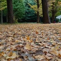 初冬の代々木公園