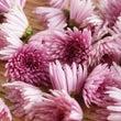 【糖尿病レシピ】菊の…