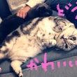 猫LIFE