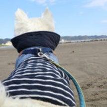 犬旅 海岸にて