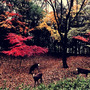 和佳奈の奈の奈良県へ