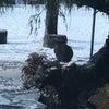雪のなかに…。の画像