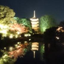 東寺のライトアップ♪