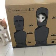 モアイの箱