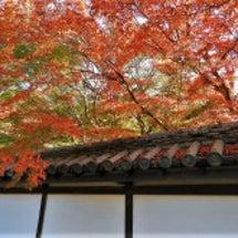 南禅寺天授庵の紅葉