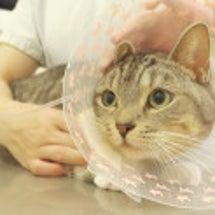 猫の動物病院での点滴…