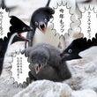 今夜の電話占い★ 決…