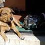 犬もエンジンもサッパ…