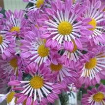 このパルプみたいな花…