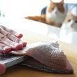 手作りねこ寿司