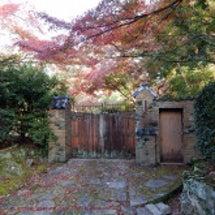 11月初めの京の紅葉