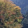 東京・秋川渓谷(1)