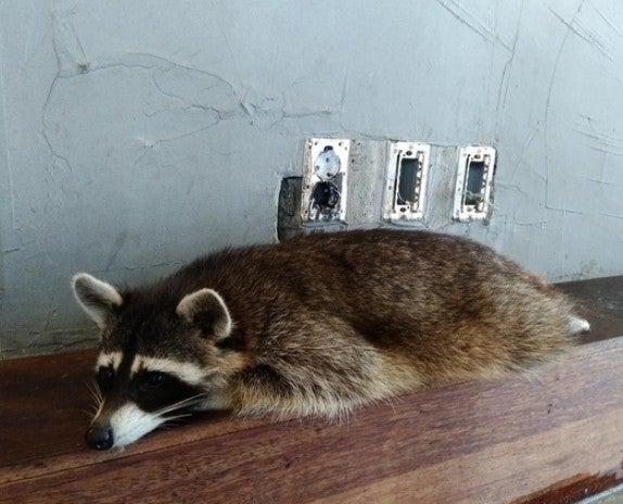 動物カフェの問題「動物カフェ」動物はストレス、人間は病気 ...