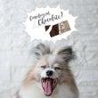 ■犬にとってチョコレ…