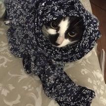 猫が………