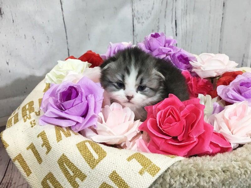 子猫ペットショップ