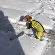 初雪やで〜〜!