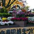 三島楽寿園菊祭り!!…
