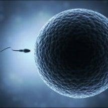 妊娠力=免疫力