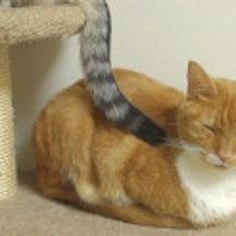 猫が大好きな姉猫を尻…