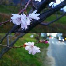 #空     十月桜…