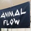 """ANIMAL FL…"