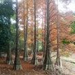 九州大学植物園-ラク…