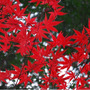 2017錦秋の京都へ…