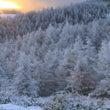 美ケ原の霧氷