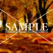 秋季ポエム「狂える紅…