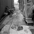 猫の棲む町