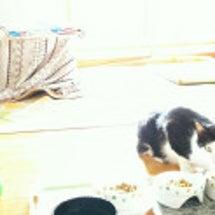別宅の猫たち~392…