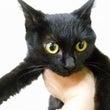 ワイルド保護子猫の人…