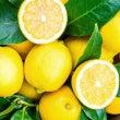 【レモン】気分転換・…
