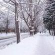 雪が降っている ta…