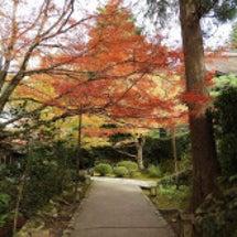 大原宝泉院の紅葉