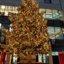 クリスマスツリーを眺…