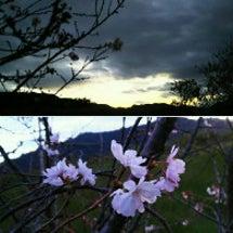 #空    十月桜と…