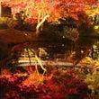 京都の「高台寺」の紅…
